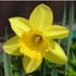 Spring Fayre and Daffodil Tea